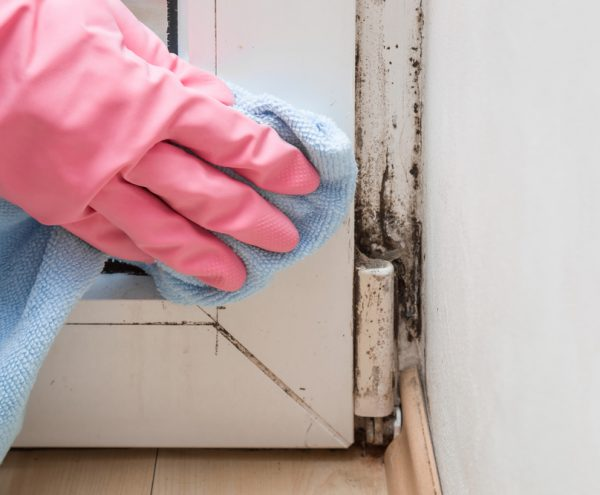 mould-removal